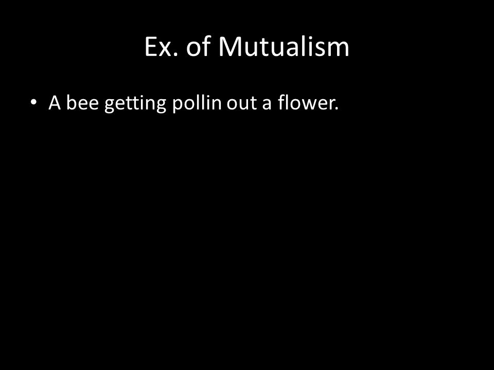 Ex. of Mutualism A bee getting pollin out a flower.