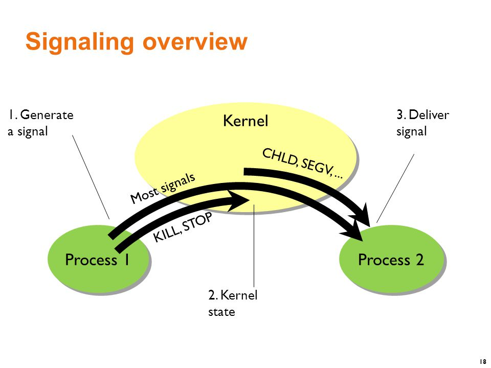18 Signaling overview Process 1 Process 2 KILL, STOP CHLD, SEGV,...