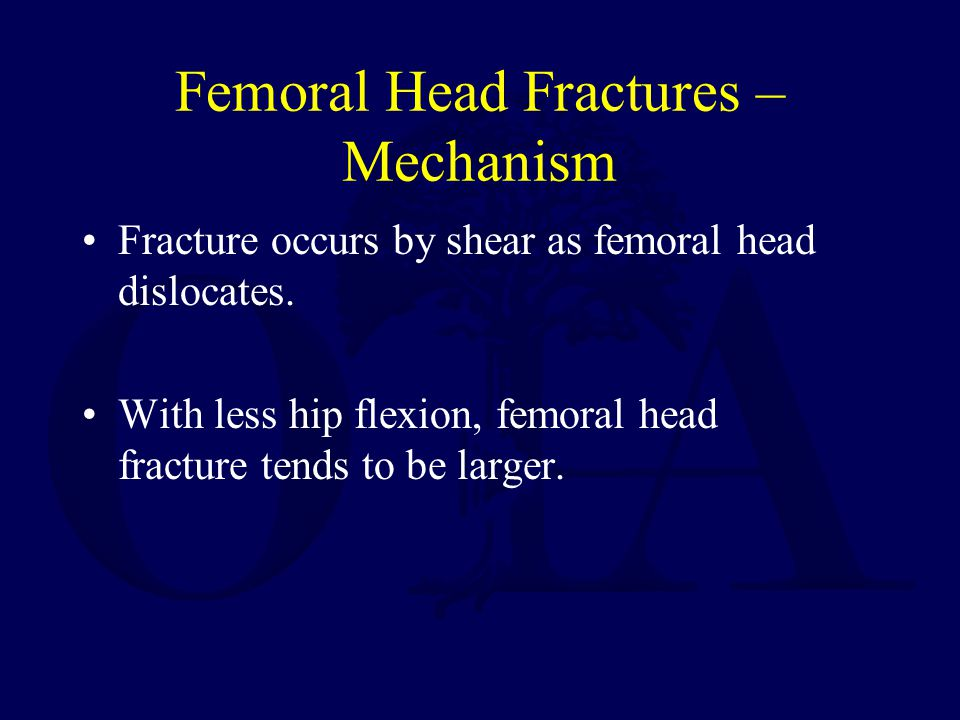 Femoral Head Fractures – Mechanism Fracture occurs by shear as femoral head dislocates. With less hip flexion, femoral head fracture tends to be large