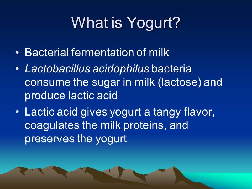 What is Yogurt.
