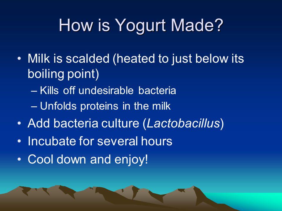 Is Yogurt Nutritious.