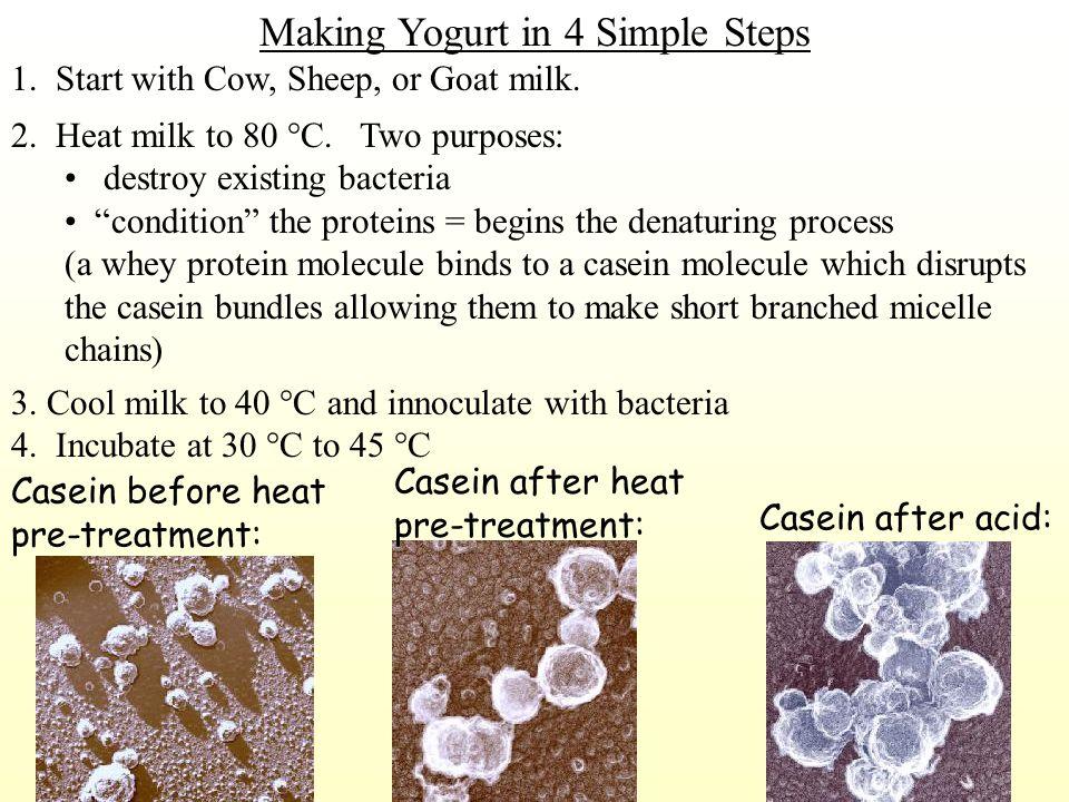 MilkYogurt Bacteria produce acid Casein protein micelles (bundles) 10 -7 meters in diameter Fat globule Acid causes Casein bundles to fall apart into separate casein molecules.