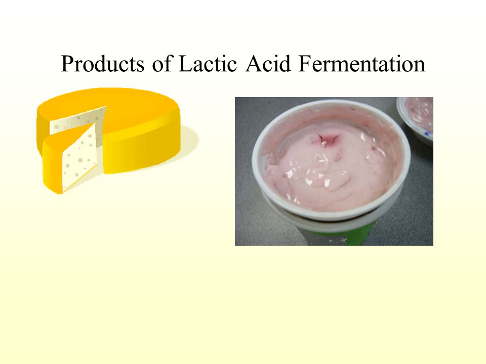 Lactic Acid Fermentation: Glucose carbon dioxide + lactic acid provides 2 molecules ATP per glucose done by muscle cells done by bacteria cells