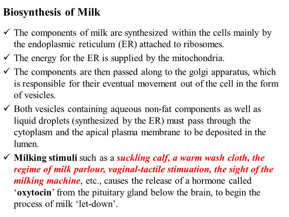 Biosynthesis of Milk The components of milk are synthesized within the cells mainly by the endoplasmic reticulum (ER) attached to ribosomes.