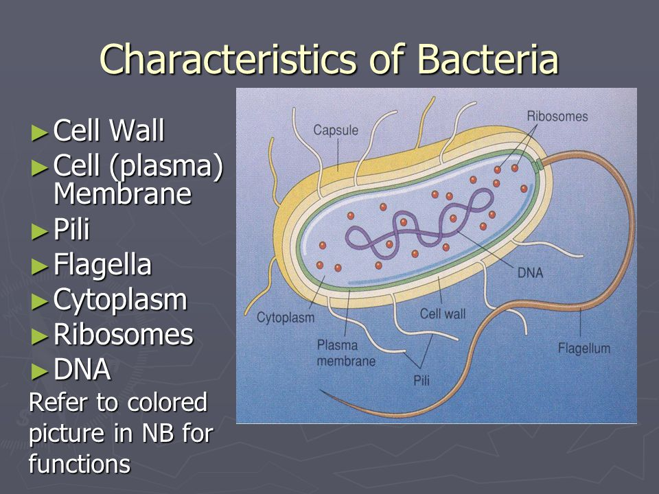 Characteristics of Bacteria ► Cell Wall ► Cell (plasma) Membrane ► Pili ► Flagella ► Cytoplasm ► Ribosomes ► DNA Refer to colored picture in NB for functions