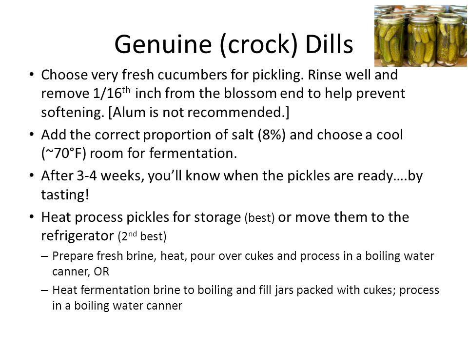 Genuine (crock) Dills Choose very fresh cucumbers for pickling.