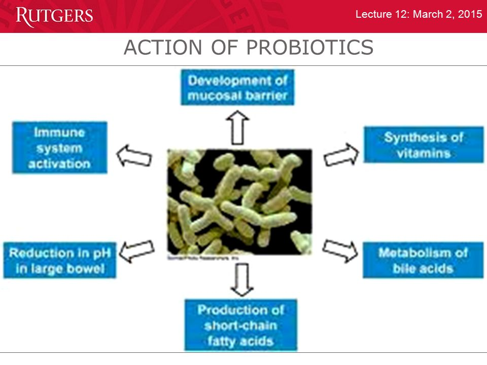 Department of Food Science Lecture 12: March 2, 2015 ACTION OF PROBIOTICS