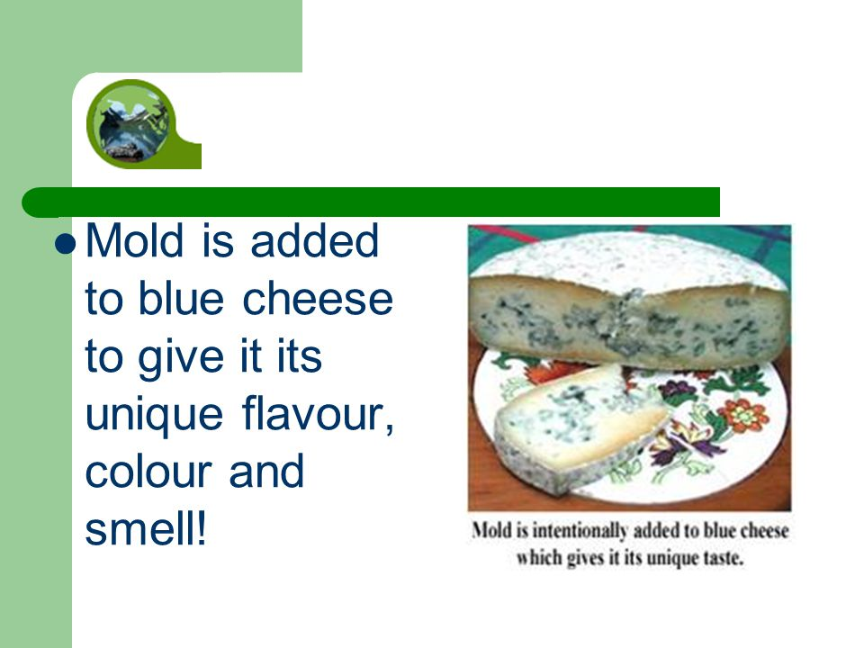 Mold is added to blue cheese to give it its unique flavour, colour and smell!