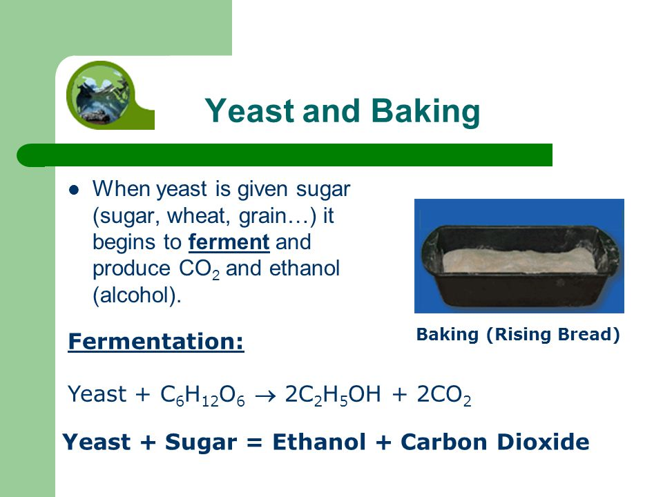 Yeast and Baking When yeast is given sugar (sugar, wheat, grain…) it begins to ferment and produce CO 2 and ethanol (alcohol).