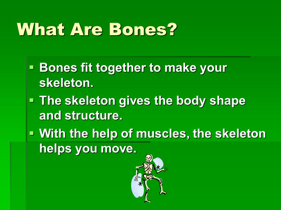 What Are Bones.  Bones fit together to make your skeleton.