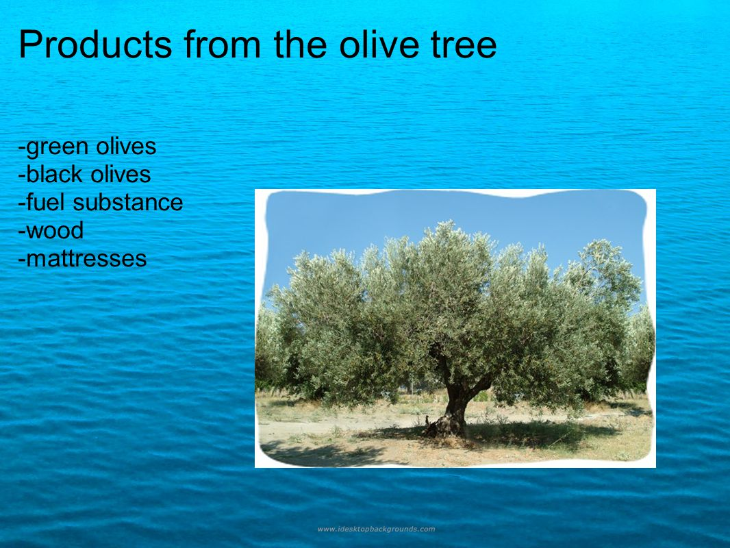 Products from the olive tree -green olives -black olives -fuel substance -wood -mattresses