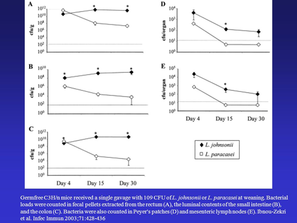 Germfree C3H/n mice received a single gavage with 109 CFU of L.