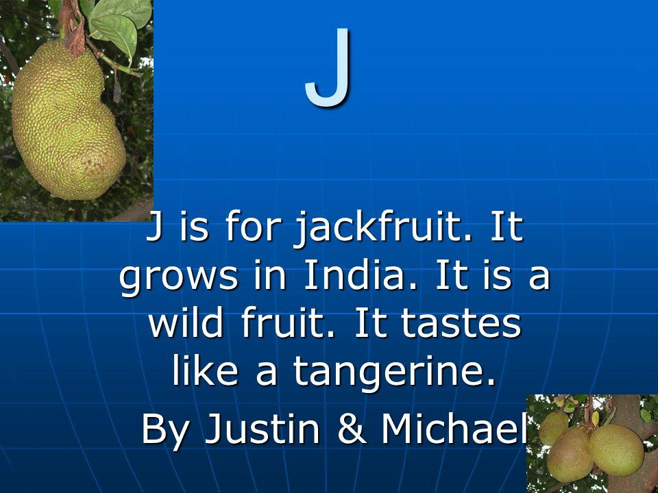J J is for jackfruit. It grows in India. It is a wild fruit. It tastes like a tangerine. By Justin & Michael