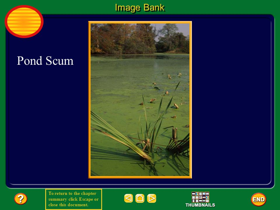 To return to the chapter summary click Escape or close this document. Image Bank Pond Scum