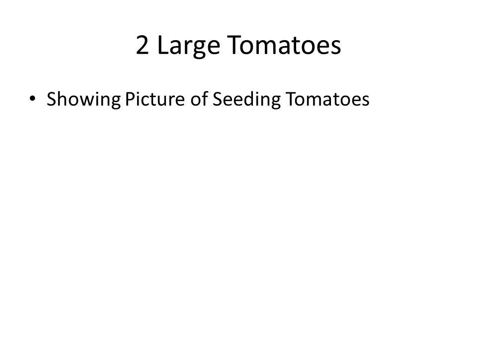 2 Large Tomatoes Showing Picture of Seeding Tomatoes