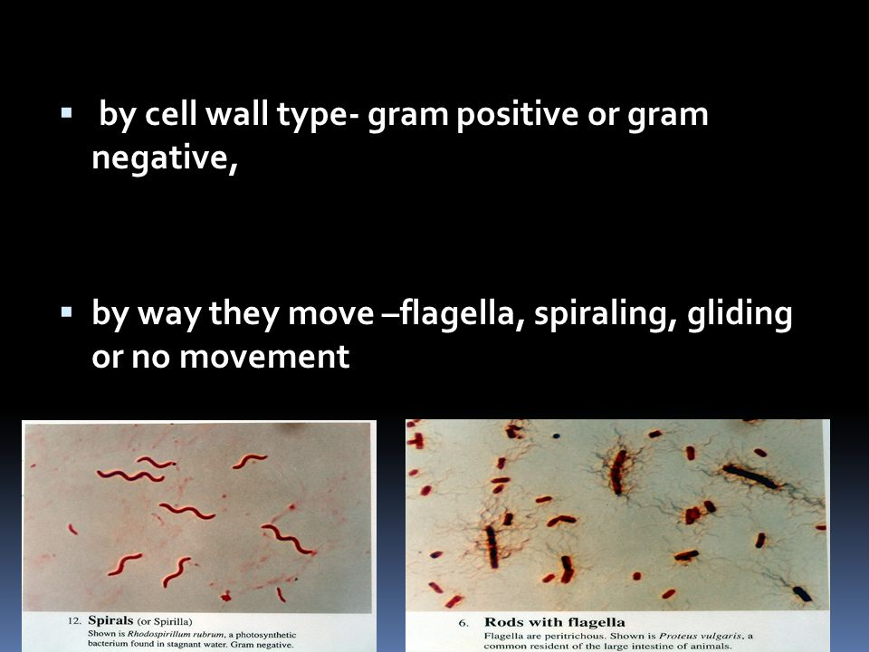  by cell wall type- gram positive or gram negative,  by way they move –flagella, spiraling, gliding or no movement