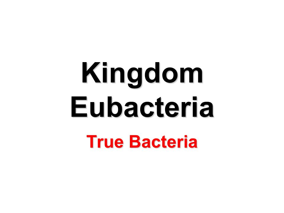 Kingdom Eubacteria True Bacteria