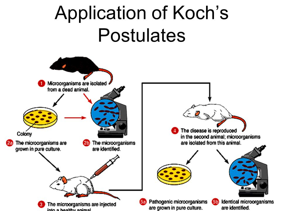 23 Application of Koch's Postulates