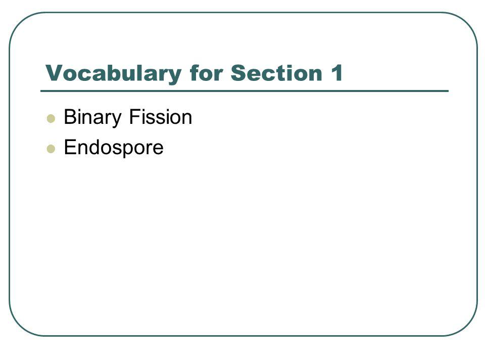 Vocabulary for Section 1 Binary Fission Endospore