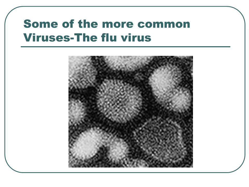Some of the more common Viruses-The flu virus