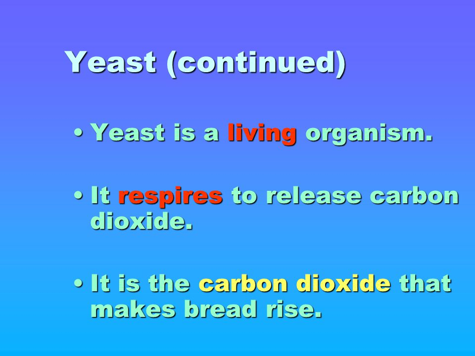 Yeast (continued) Yeast is a living organism.Yeast is a living organism. It respires to release carbon dioxide.It respires to release carbon dioxide.