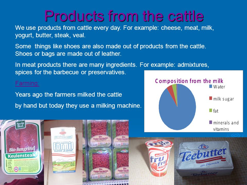 Products from the cattle We use products from cattle every day.