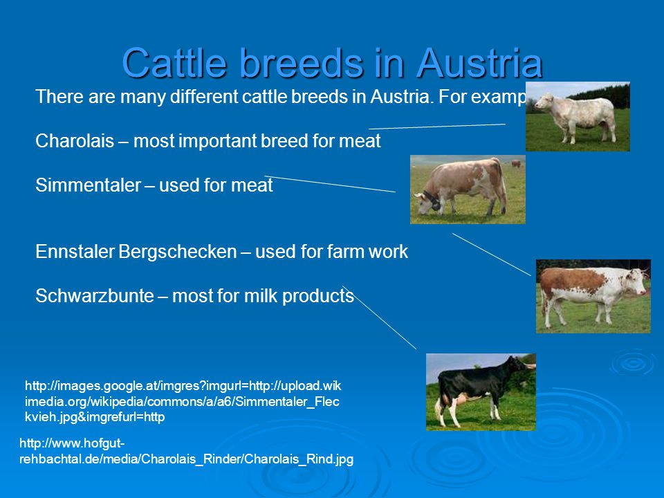 Cattle breeds in Austria There are many different cattle breeds in Austria.
