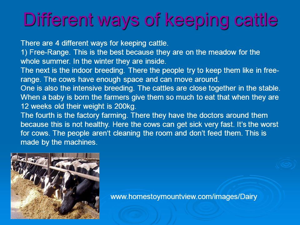 Different ways of keeping cattle There are 4 different ways for keeping cattle.