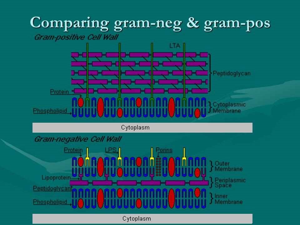 Comparing gram-neg & gram-pos