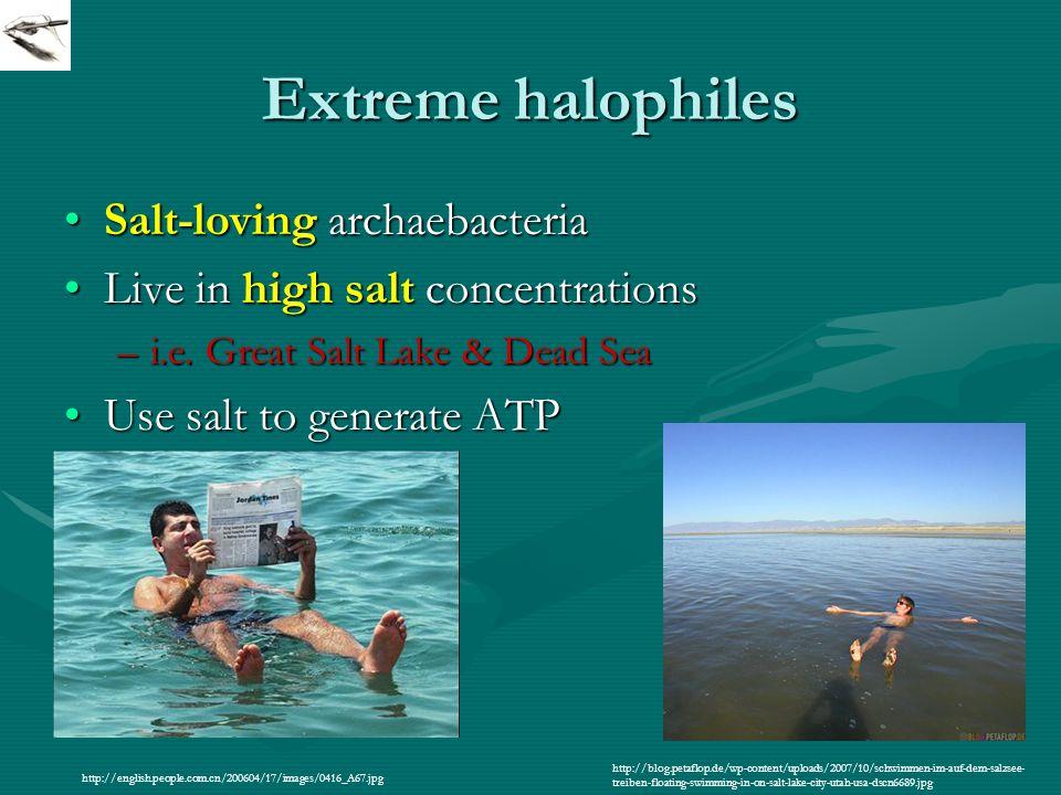 Extreme halophiles Salt-loving archaebacteriaSalt-loving archaebacteria Live in high salt concentrationsLive in high salt concentrations –i.e.