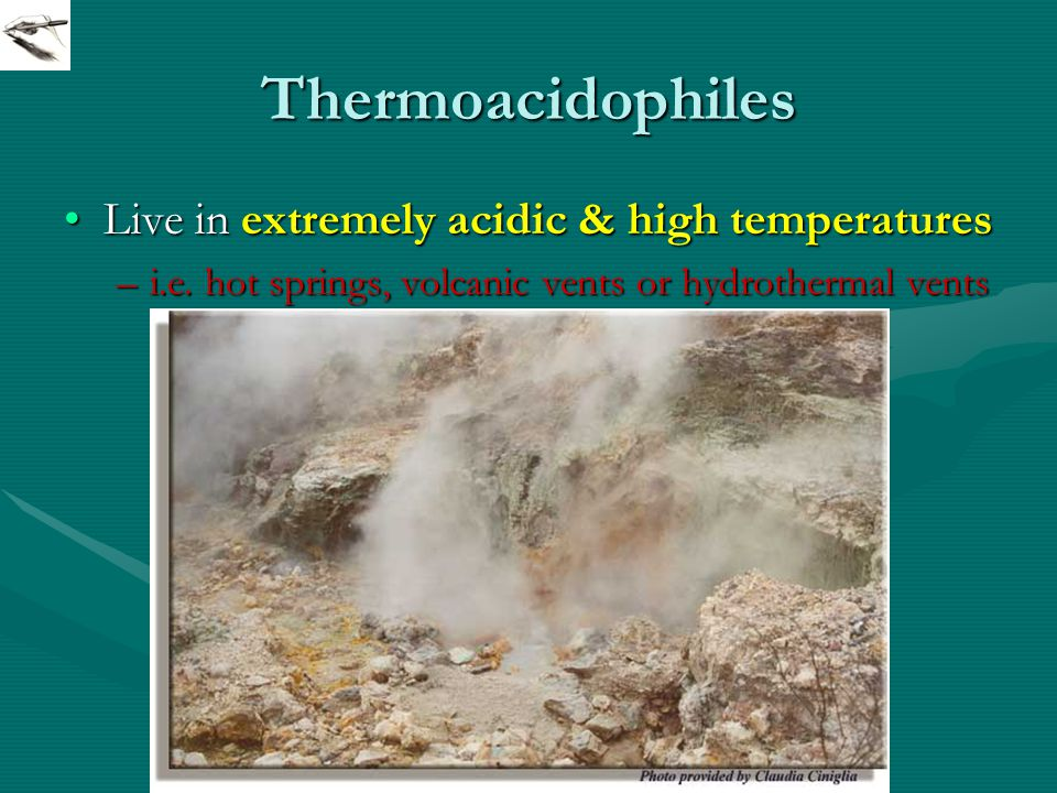 Thermoacidophiles Live in extremely acidic & high temperaturesLive in extremely acidic & high temperatures –i.e.