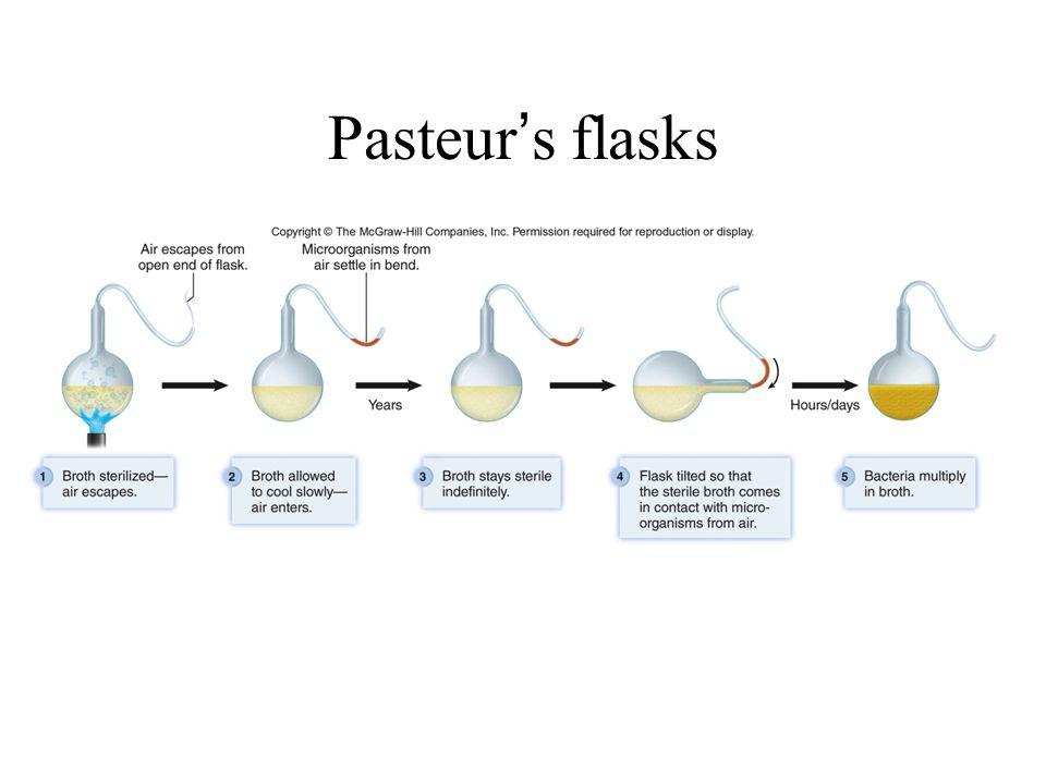 Pasteur's flasks