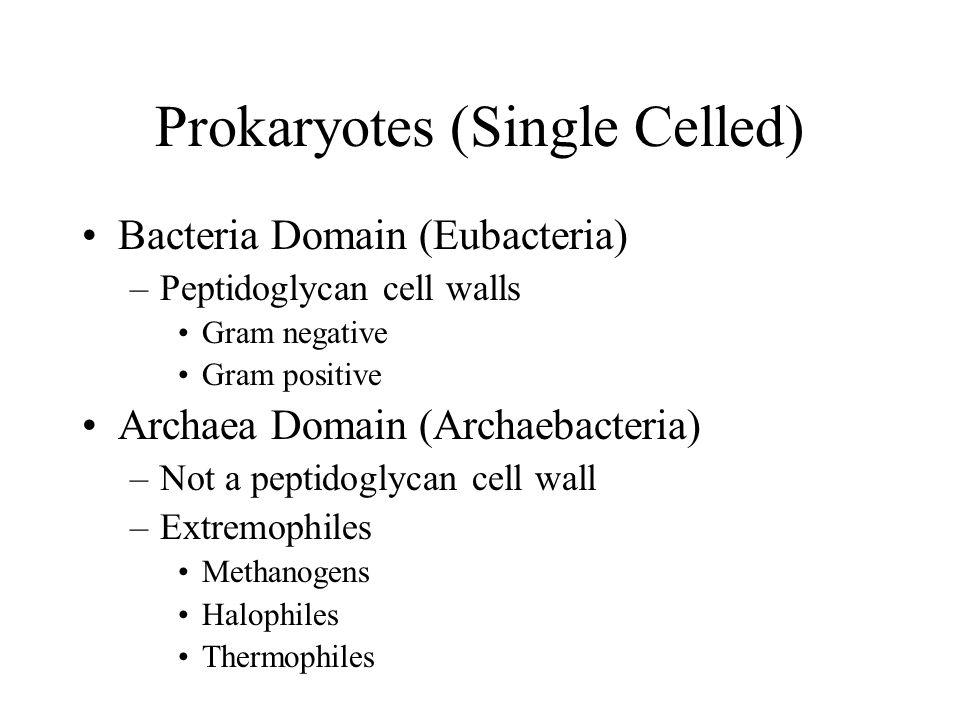 Prokaryotes (Single Celled) Bacteria Domain (Eubacteria) –Peptidoglycan cell walls Gram negative Gram positive Archaea Domain (Archaebacteria) –Not a peptidoglycan cell wall –Extremophiles Methanogens Halophiles Thermophiles