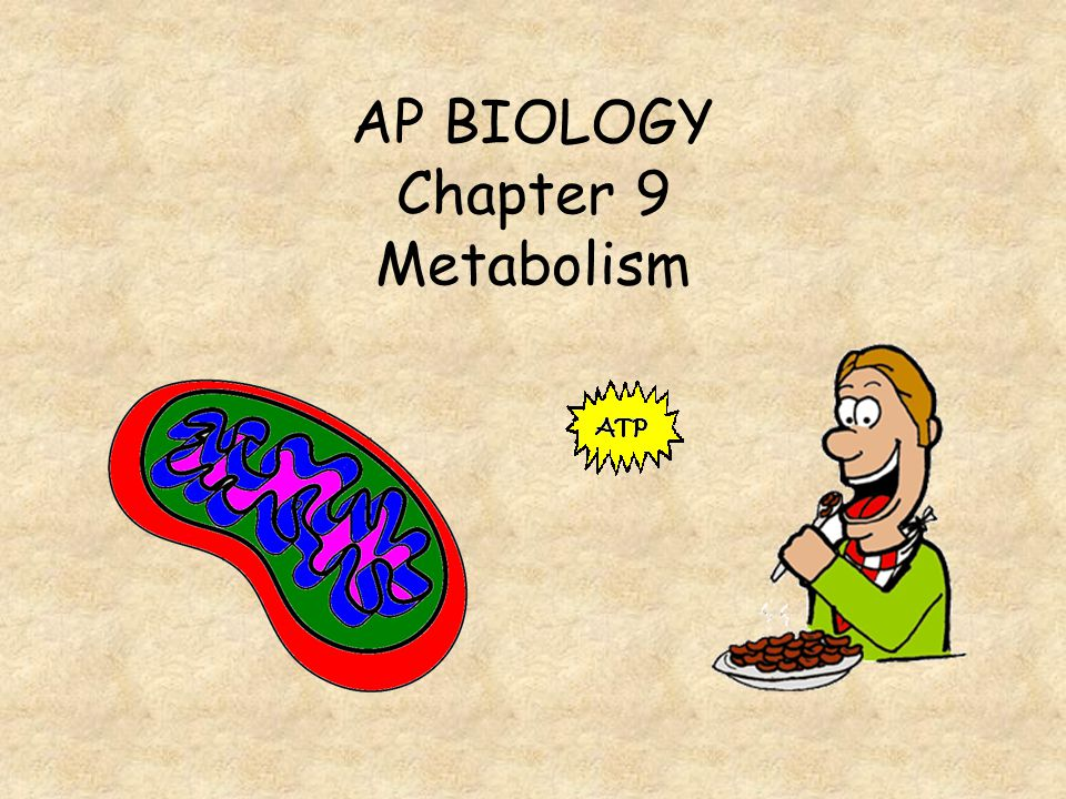 What is the net production of ATP during glycolysis.