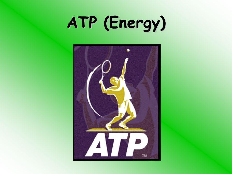ATP (Energy)