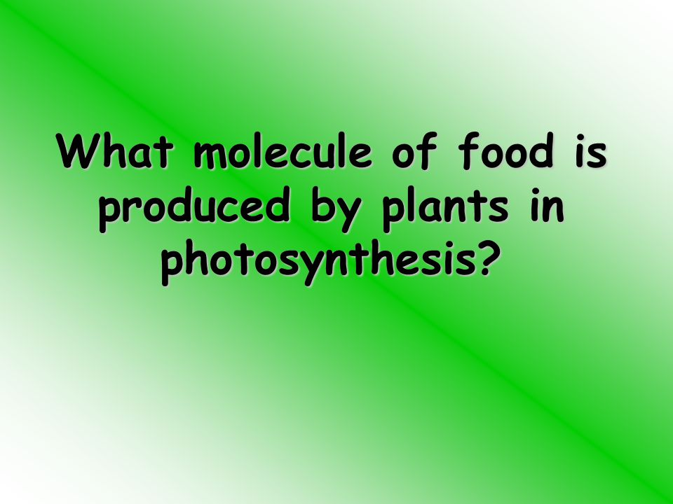 What molecule of food is produced by plants in photosynthesis