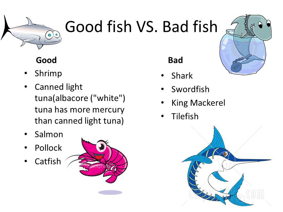 Good fish VS.