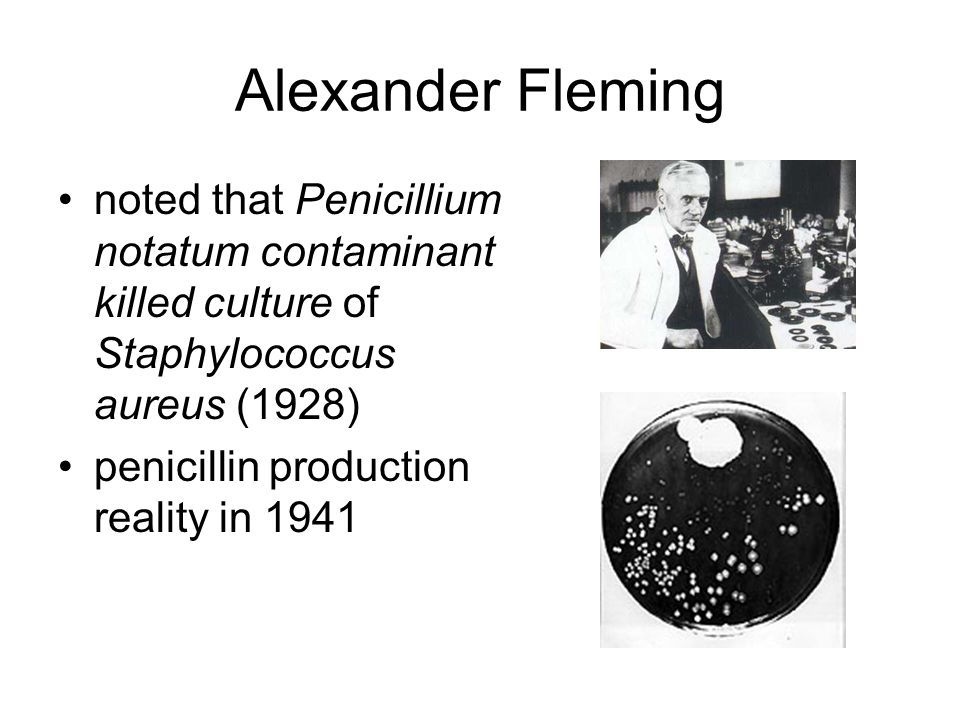 Penicillin prepared in highly dilute, impure and unstable solutions prior to WWII up to 1943, batch purification process that inactivated up to 65% Shell chemical engineers build pilot plant that processed 750 L broth/day with 85% recovery
