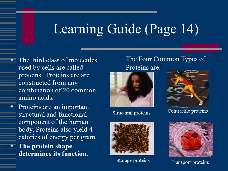 Learning Guide (Page 14)  The third class of molecules used by cells are called proteins.