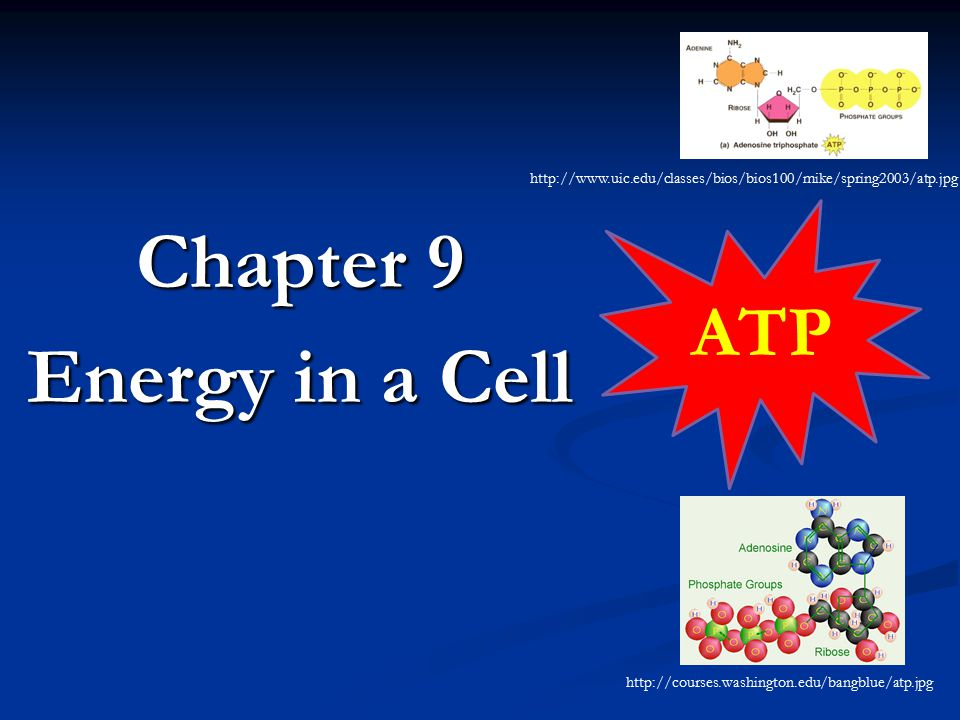 Chapter 9 Energy in a Cell http://www.uic.edu/classes/bios/bios100/mike/spring2003/atp.jpg ATP http://courses.washington.edu/bangblue/atp.jpg