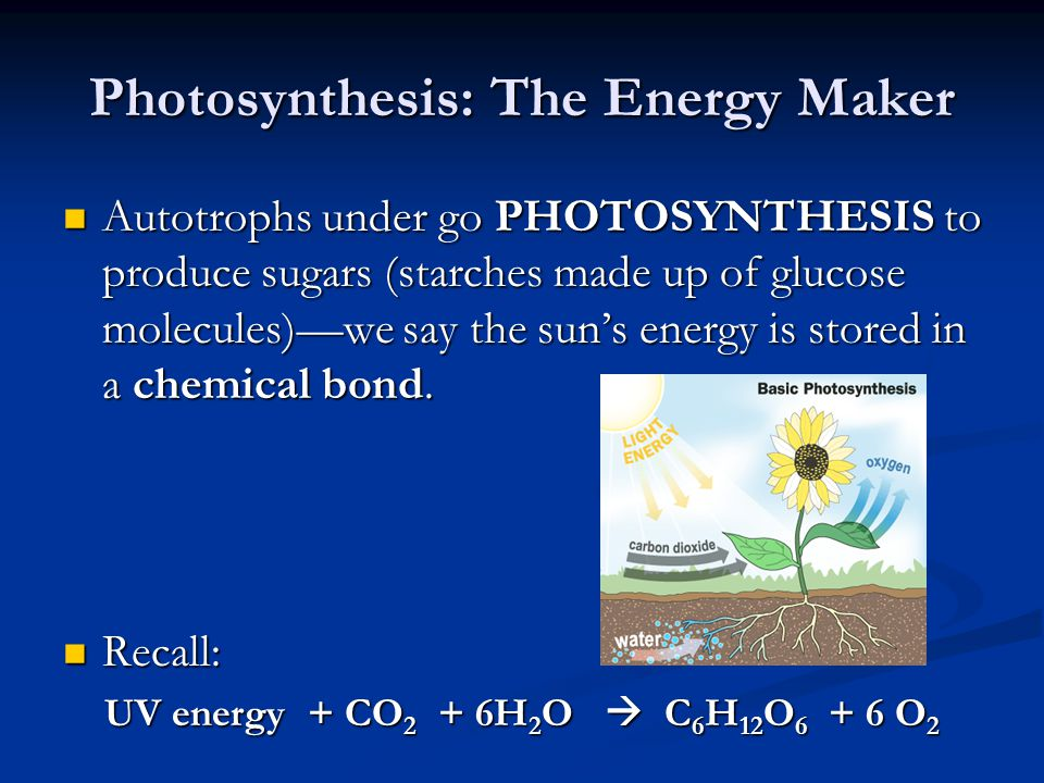 Photosynthesis: The Energy Maker Autotrophs under go PHOTOSYNTHESIS to produce sugars (starches made up of glucose molecules)—we say the sun's energy is stored in a chemical bond.