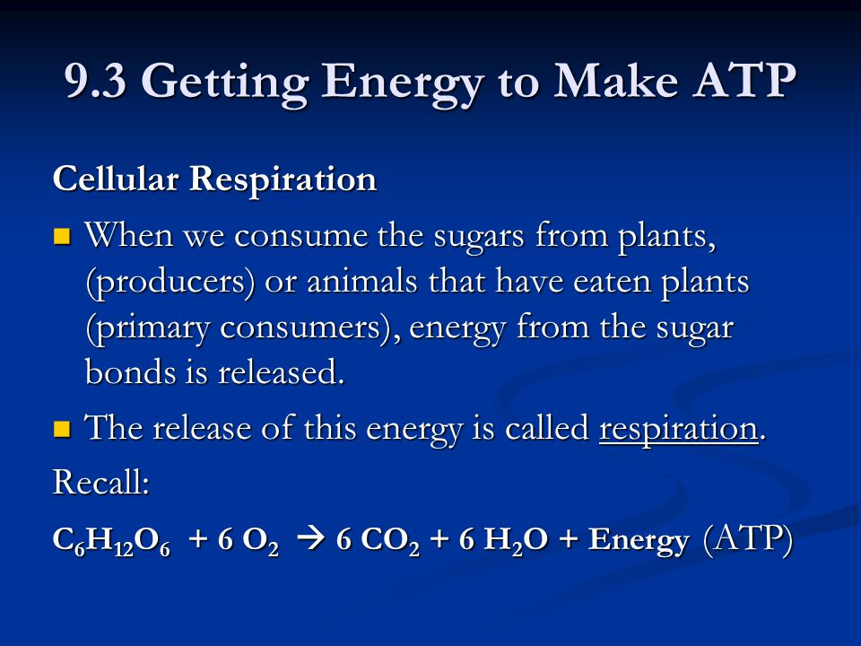 9.3 Getting Energy to Make ATP Cellular Respiration When we consume the sugars from plants, (producers) or animals that have eaten plants (primary consumers), energy from the sugar bonds is released.