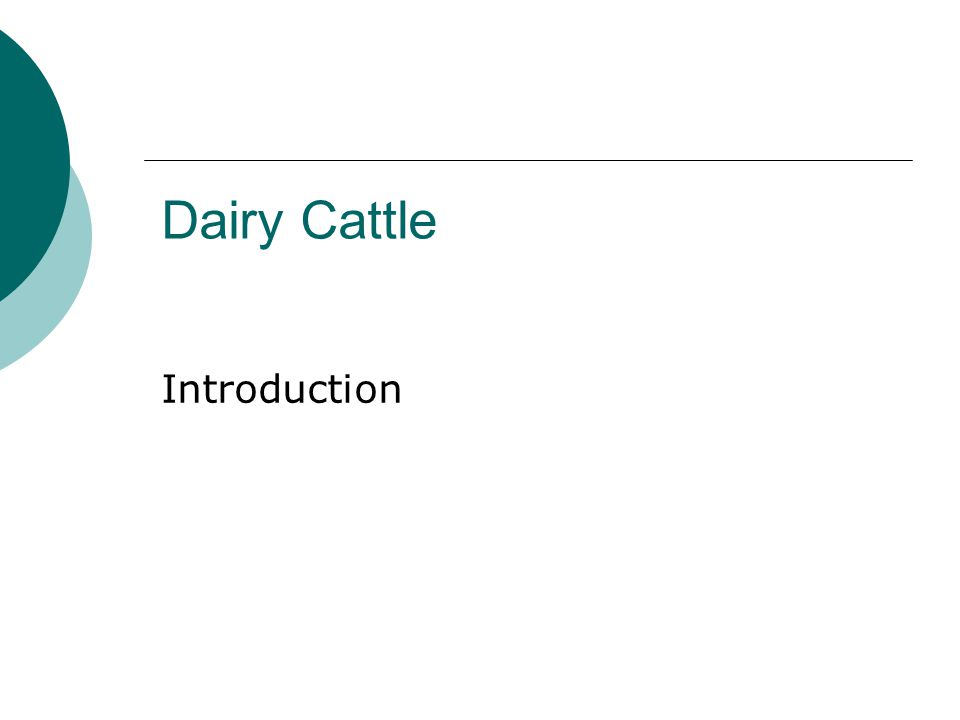 Dairy Cattle Introduction