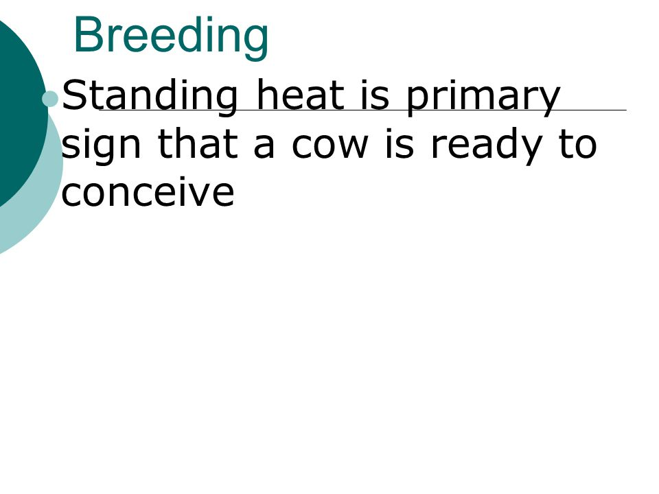 Breeding Standing heat is primary sign that a cow is ready to conceive