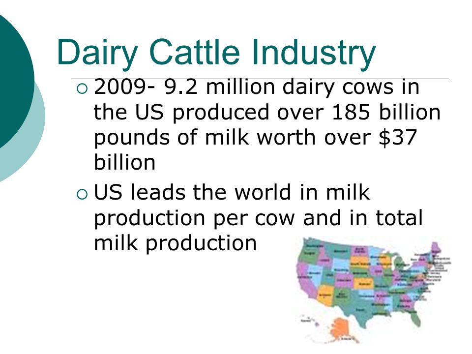 Dairy Cattle Industry  2009- 9.2 million dairy cows in the US produced over 185 billion pounds of milk worth over $37 billion  US leads the world in milk production per cow and in total milk production