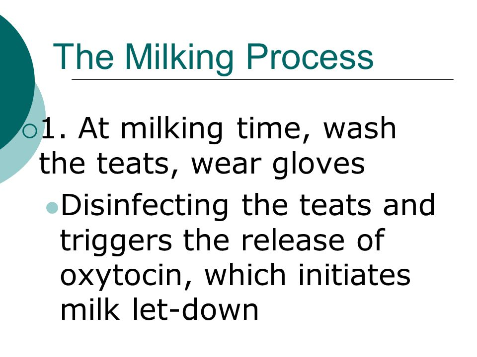 The Milking Process  1.