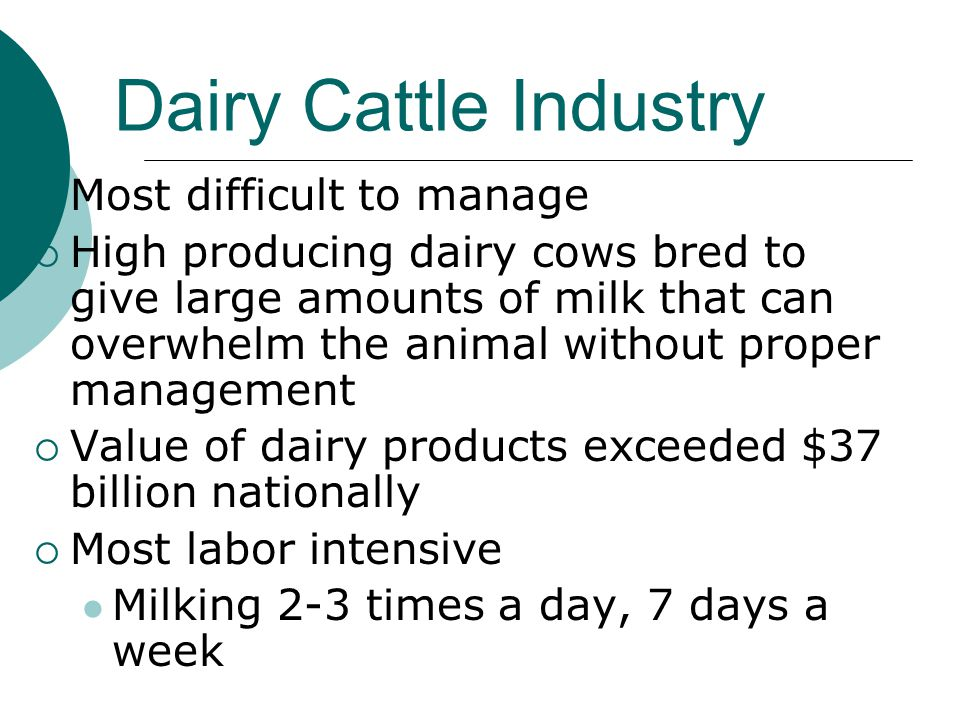 Dairy Cattle Industry  Most difficult to manage  High producing dairy cows bred to give large amounts of milk that can overwhelm the animal without proper management  Value of dairy products exceeded $37 billion nationally  Most labor intensive Milking 2-3 times a day, 7 days a week