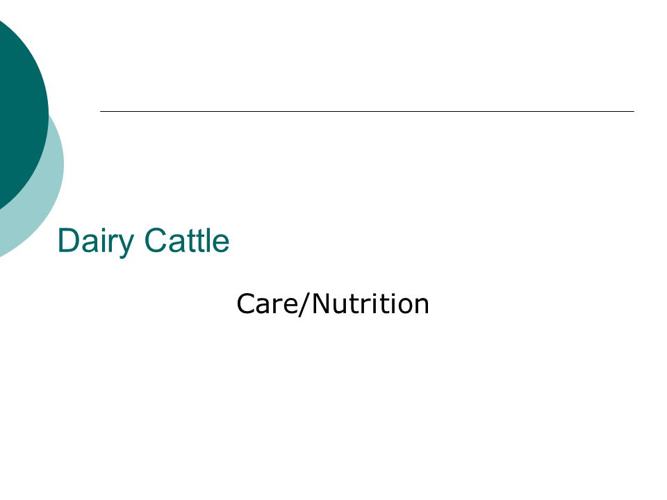 Dairy Cattle Care/Nutrition