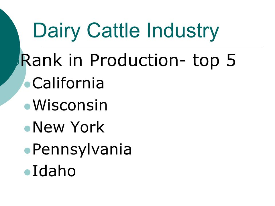 Dairy Cattle Industry  Rank in Production- top 5 California Wisconsin New York Pennsylvania Idaho
