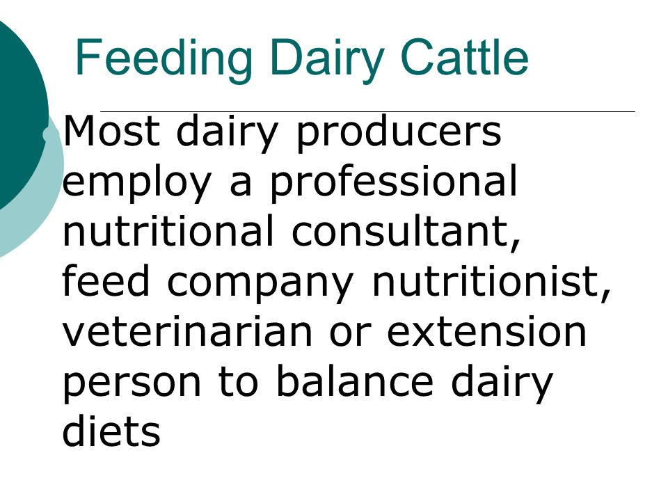 Feeding Dairy Cattle Most dairy producers employ a professional nutritional consultant, feed company nutritionist, veterinarian or extension person to balance dairy diets